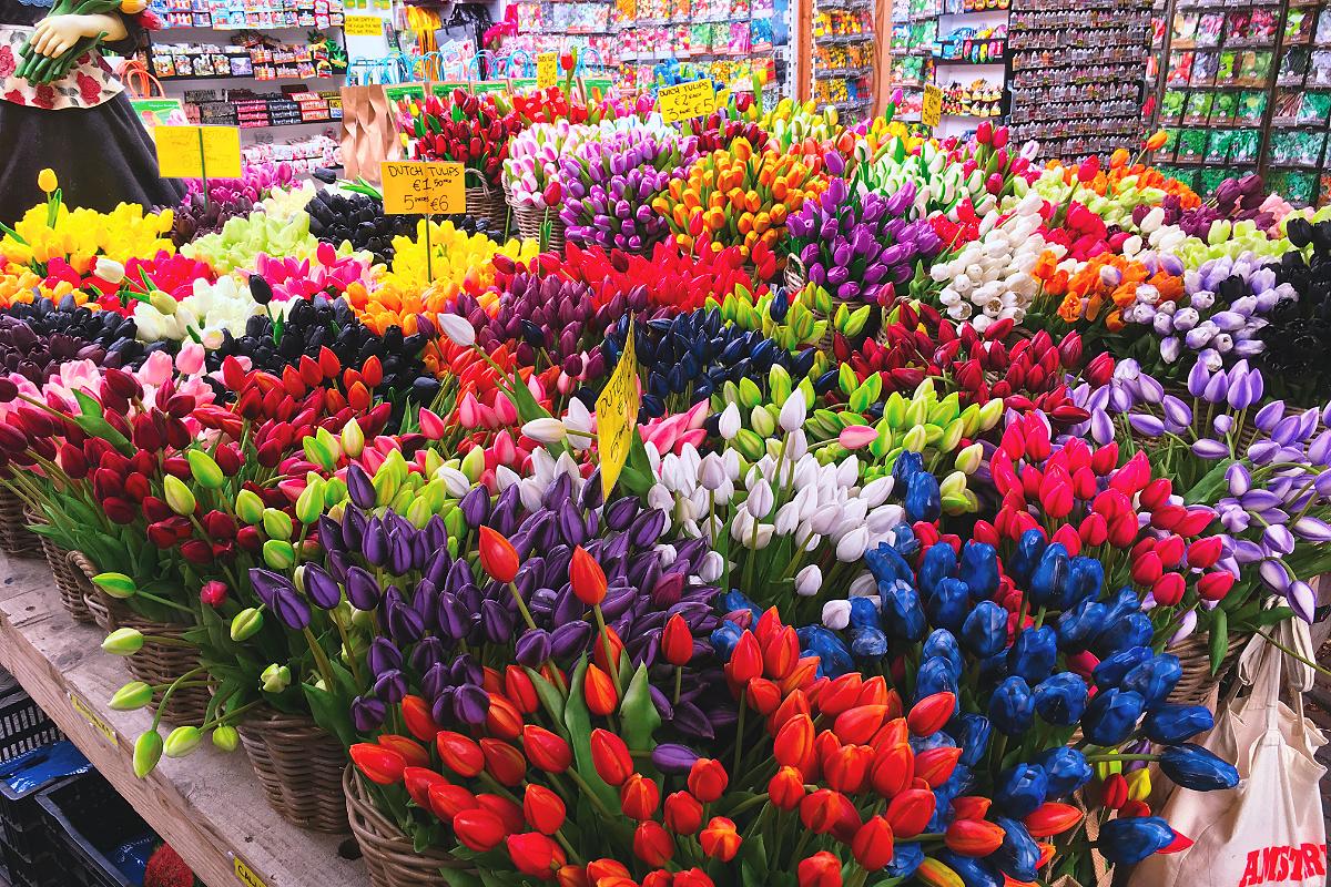 Amsterdam zu Fuß erkunden Blumenmarkt Tulpen