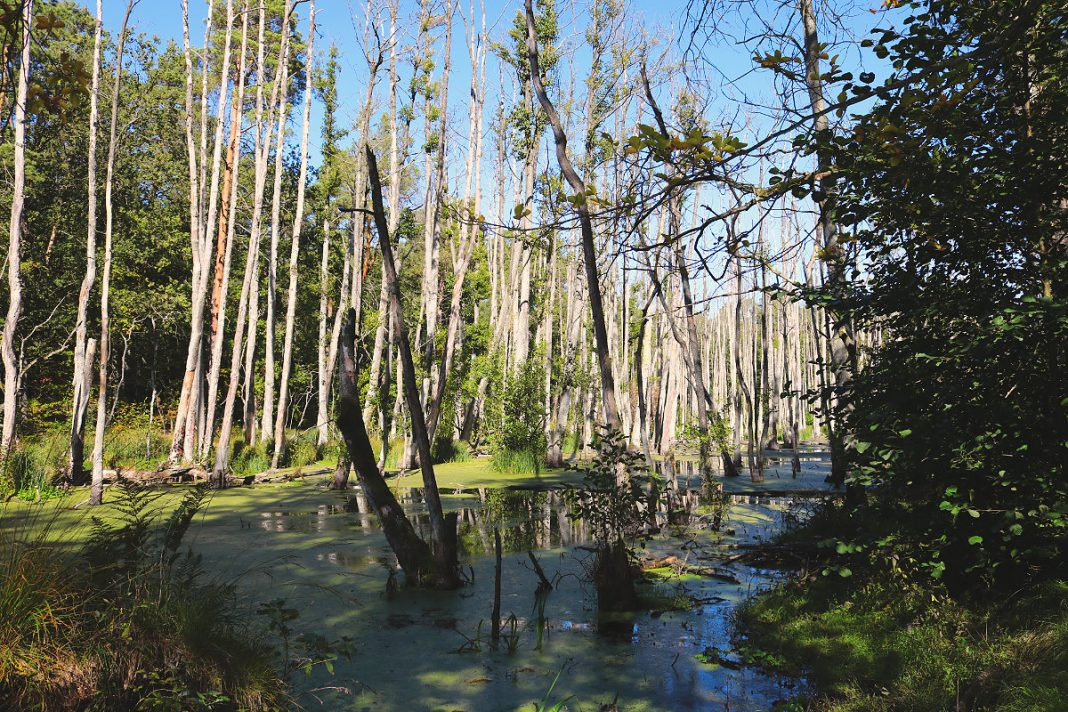 Wanderung Briesetal Bäume im Wasser