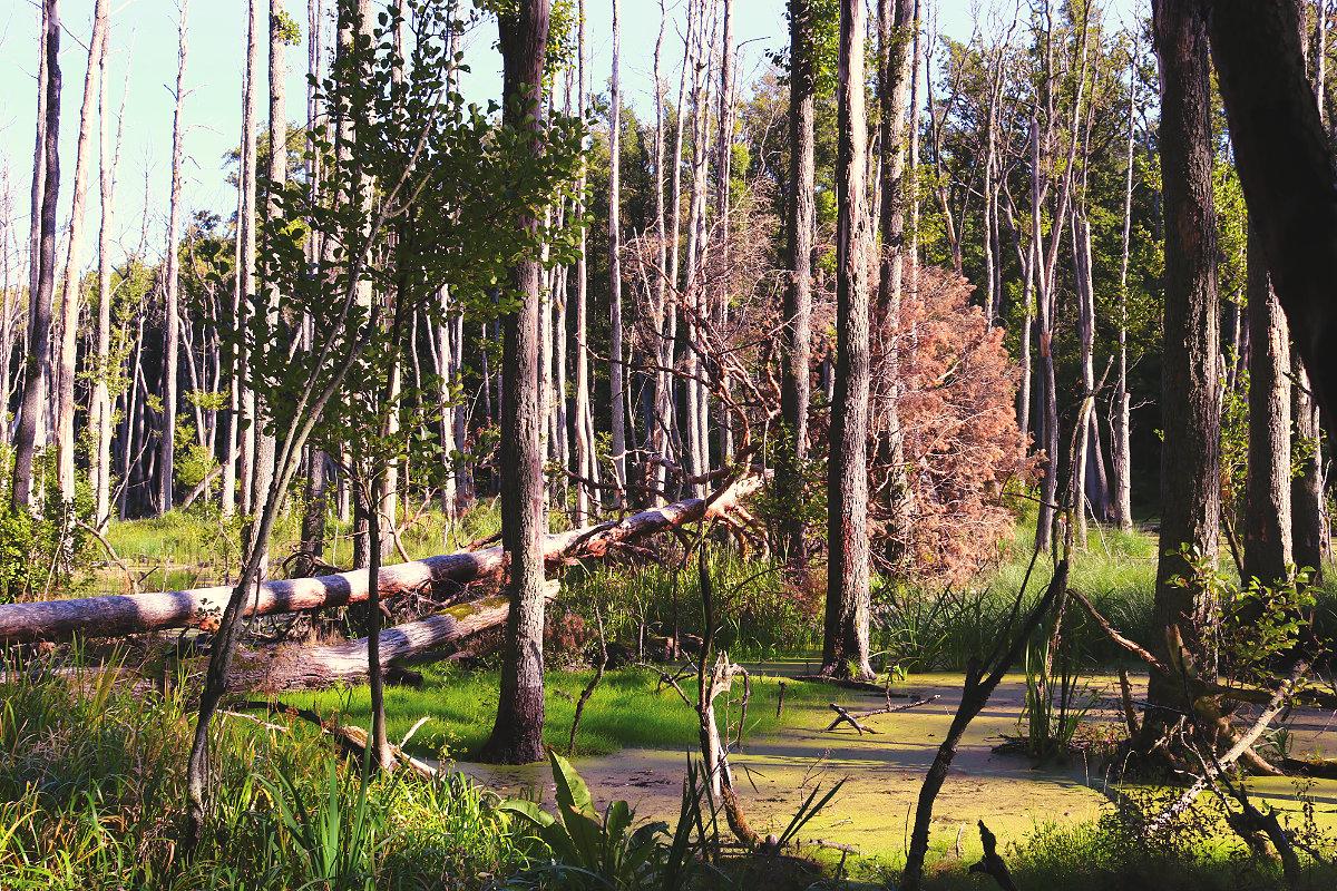 Wanderung Briesetal Sumpf Moor