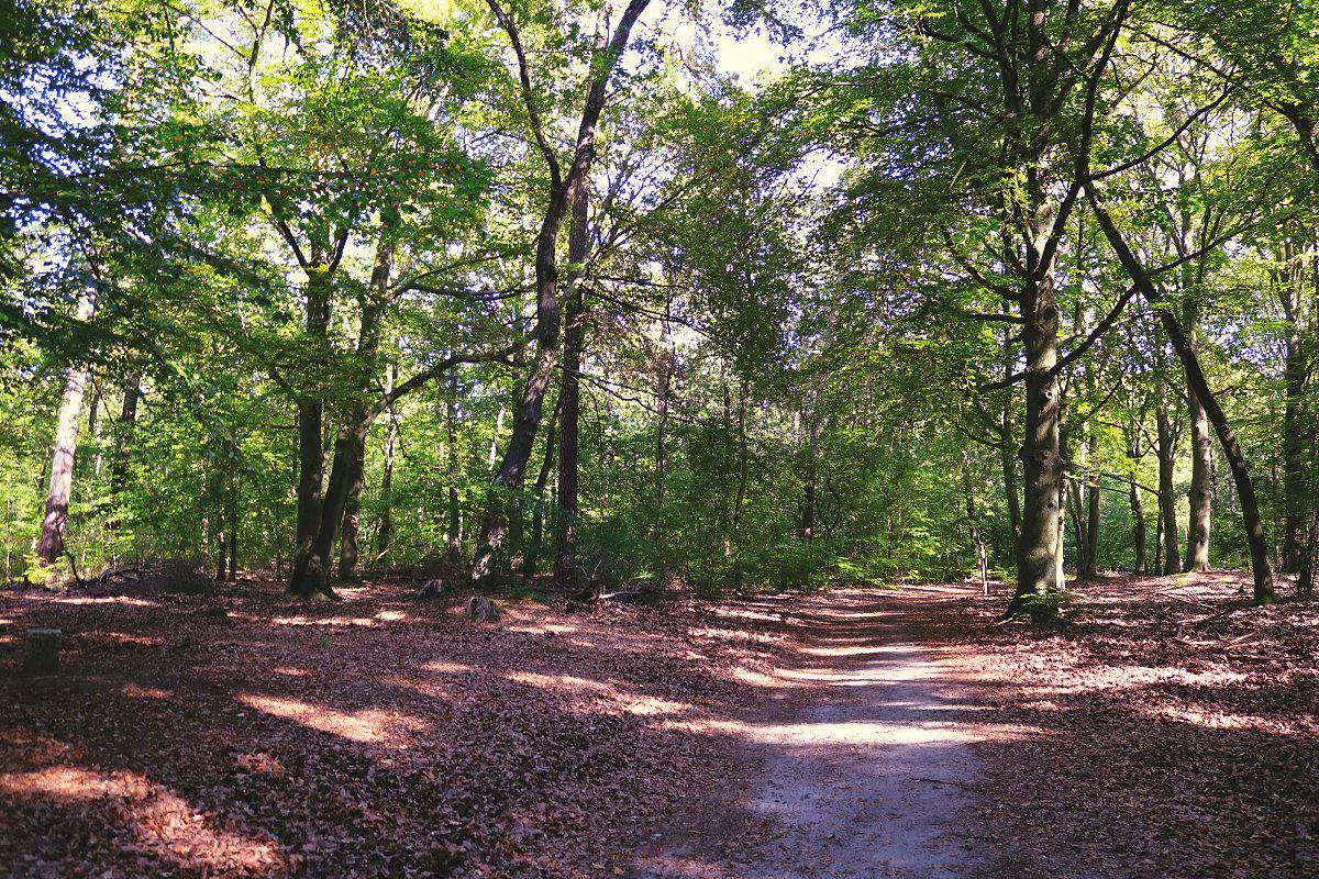 Wanderung Briesetal Waldwanderweg