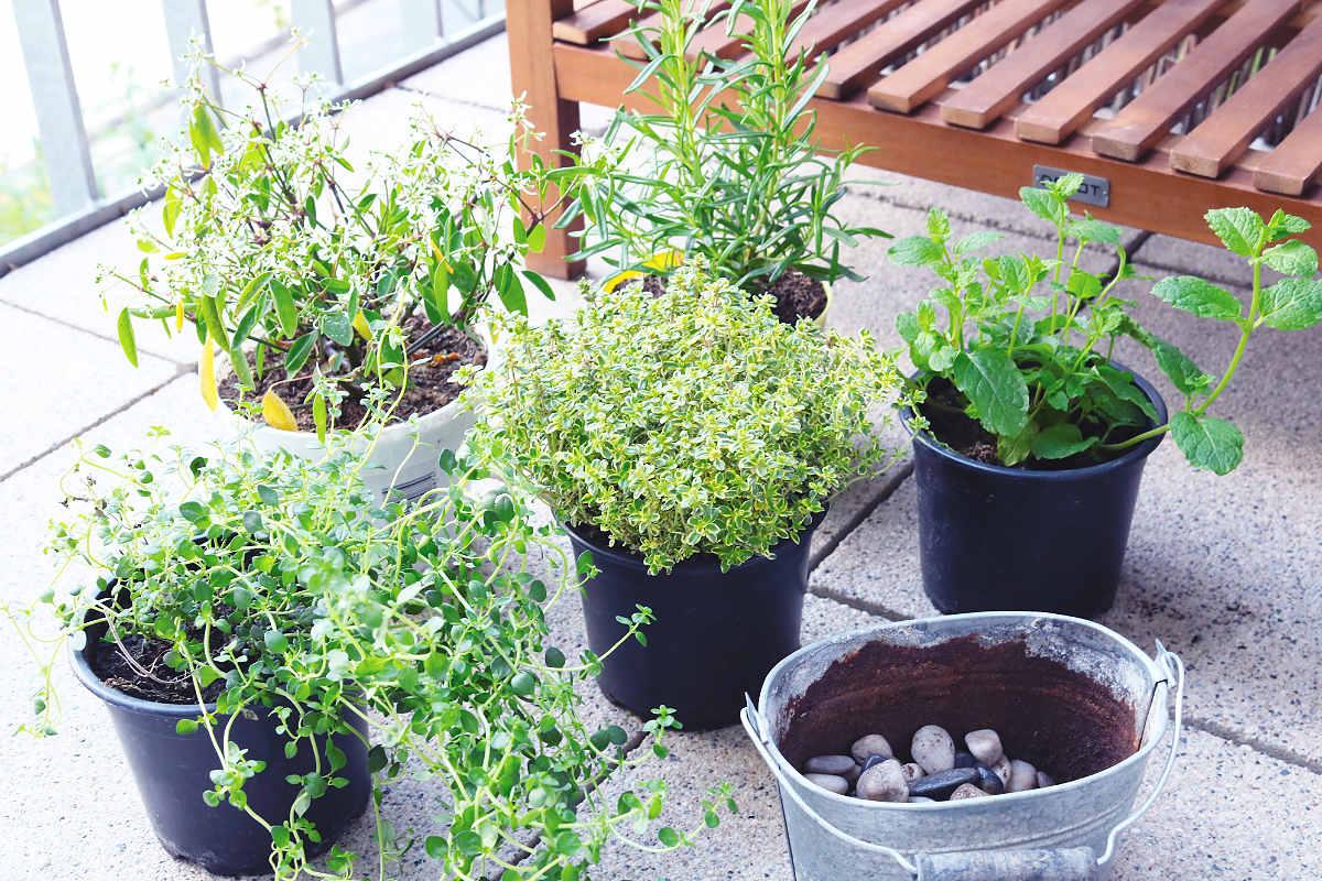 Hochbeet für Balkon bepflanzen